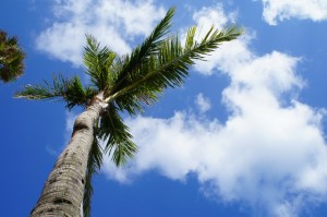 沖縄の青い空。
